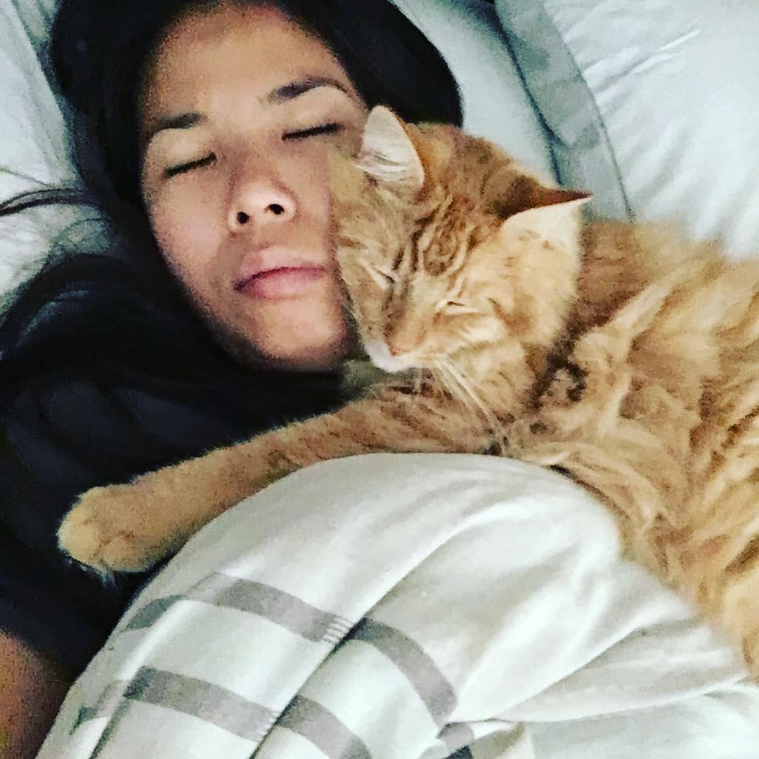 15 chats heureux adoptés