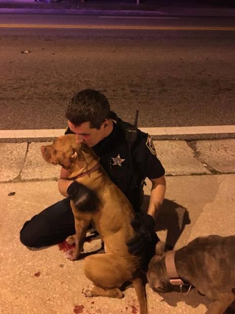 chien policiers
