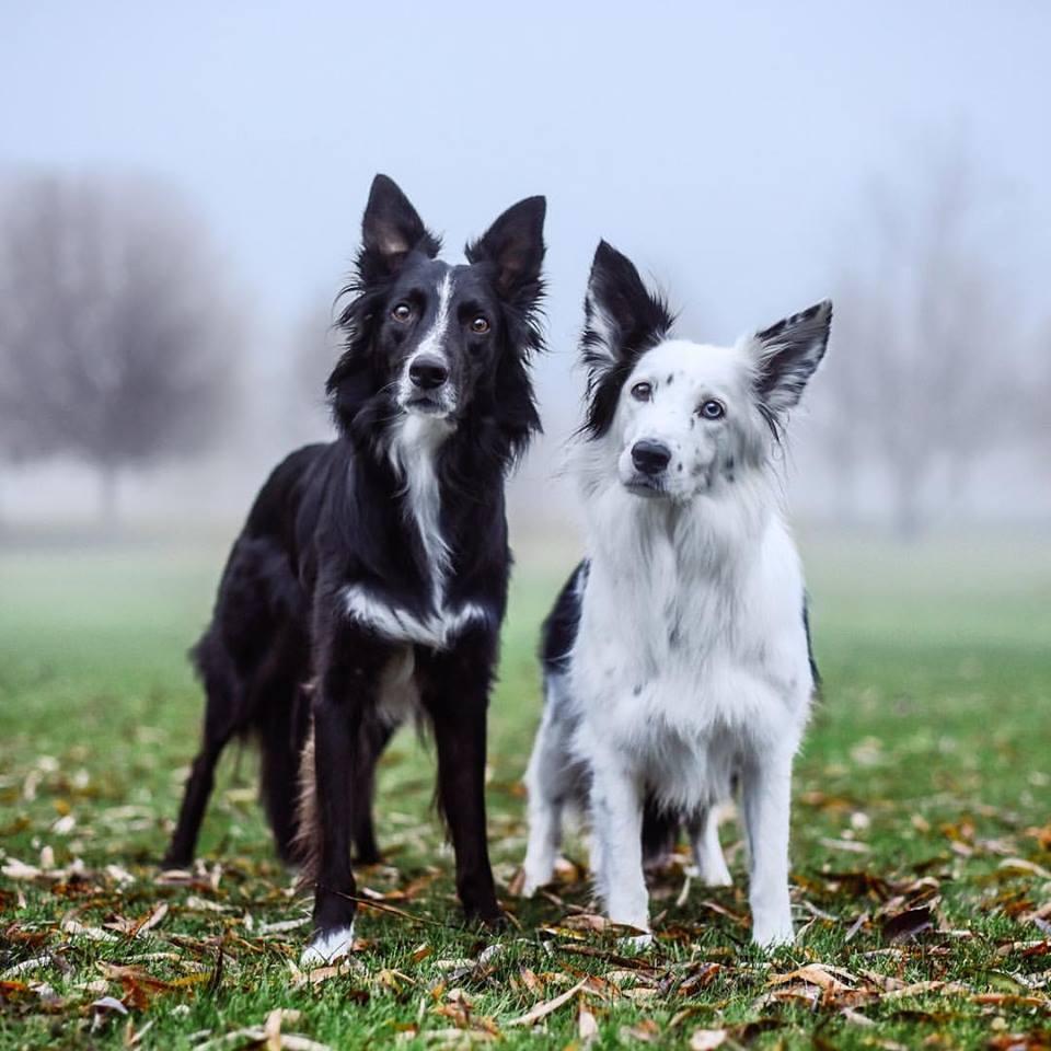 chiens qui se font des câlins