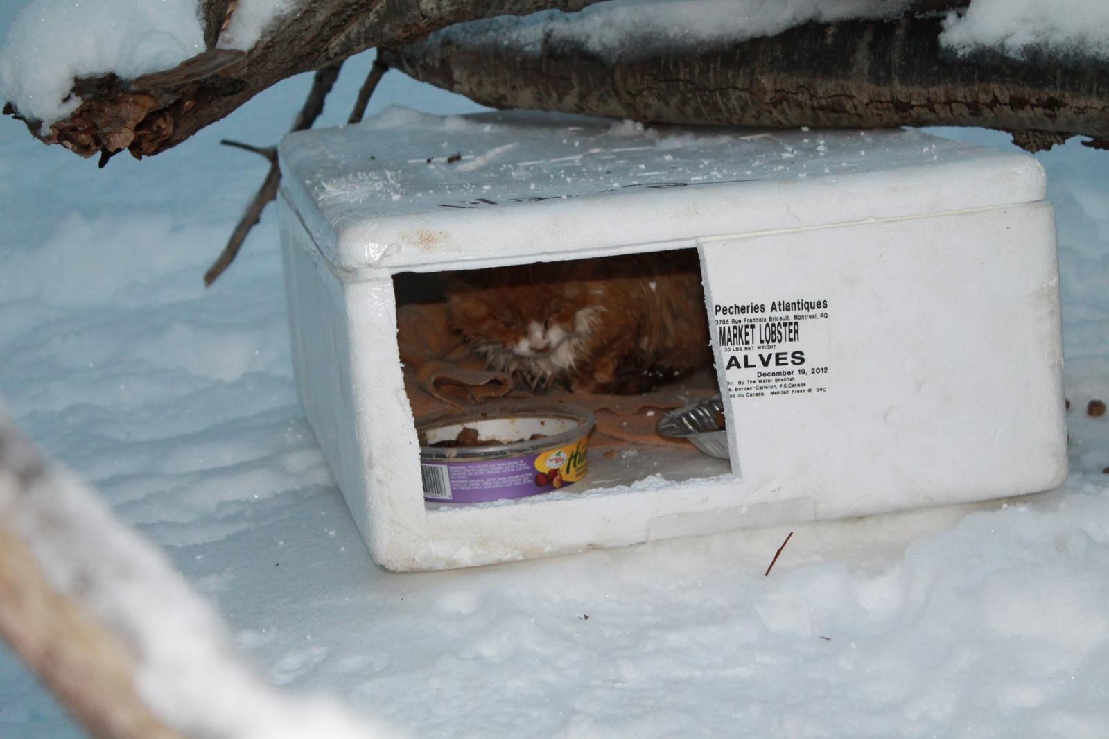 chat dans une boite carton neige