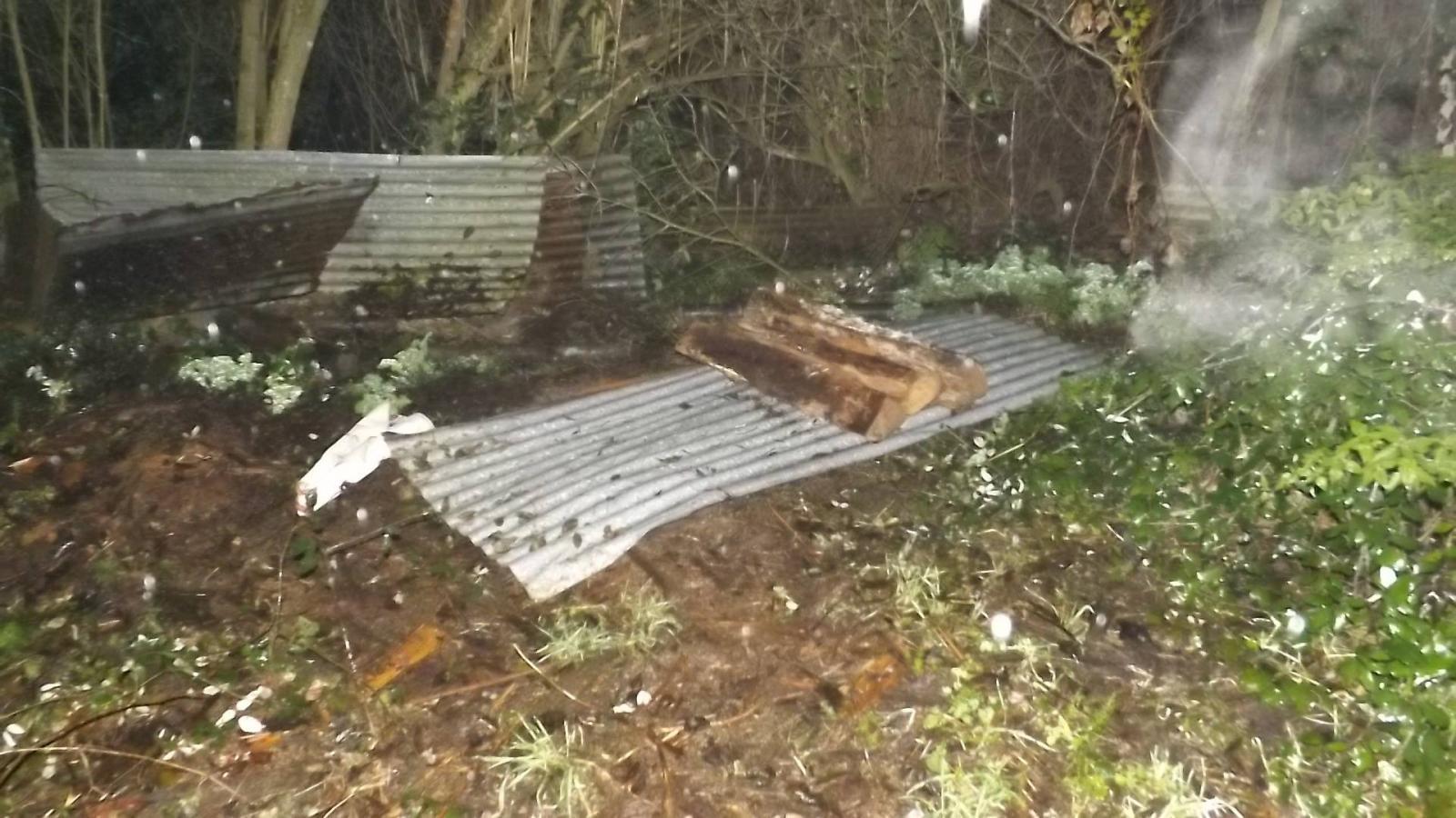 aslan chien enterré vivant
