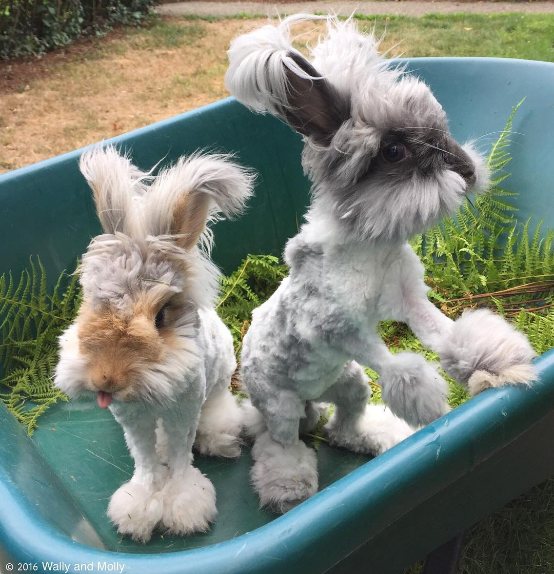 Wally et suki les lapins peluches