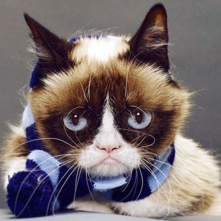Grumpy Cat Blue Monday