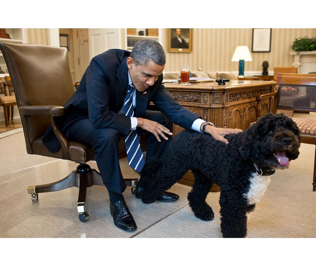 bo et barack obama