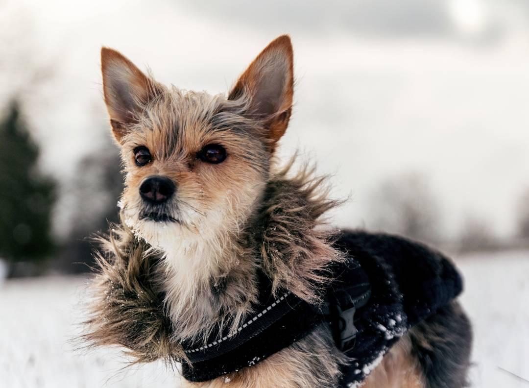 lulu chien blue monday