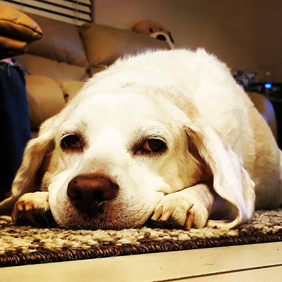 chien déprimé blue monday