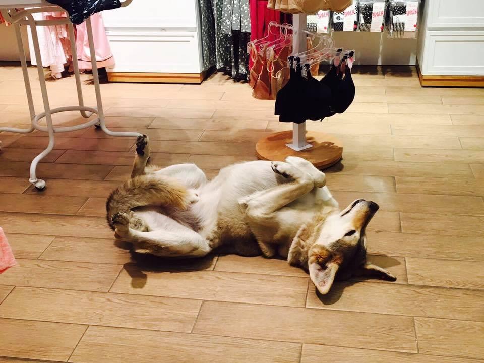 chiens errants centre commercial turc