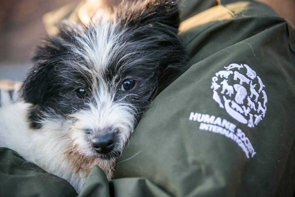 chiens sauvés des fermes à viande