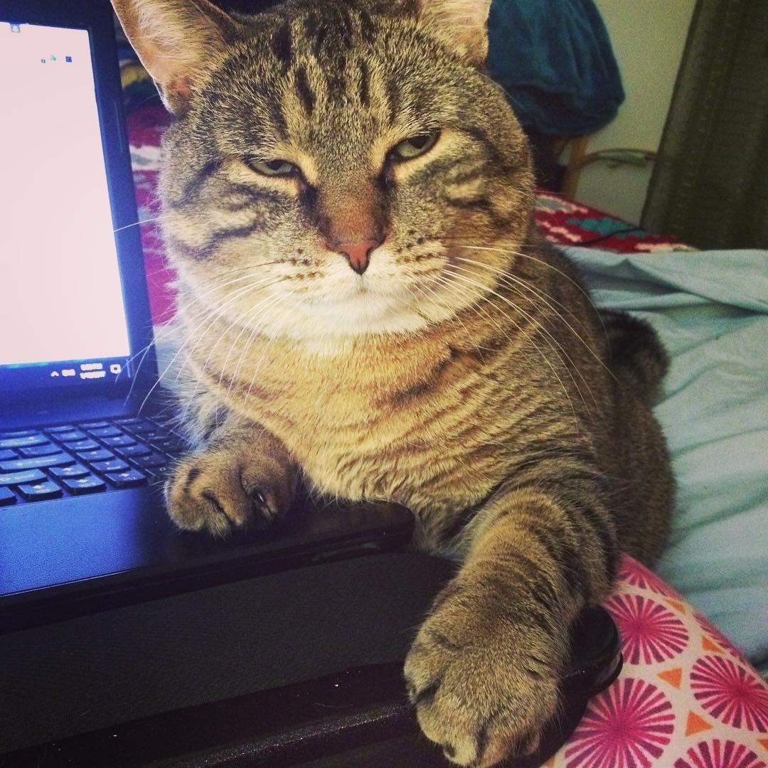 chat déprime blue monday