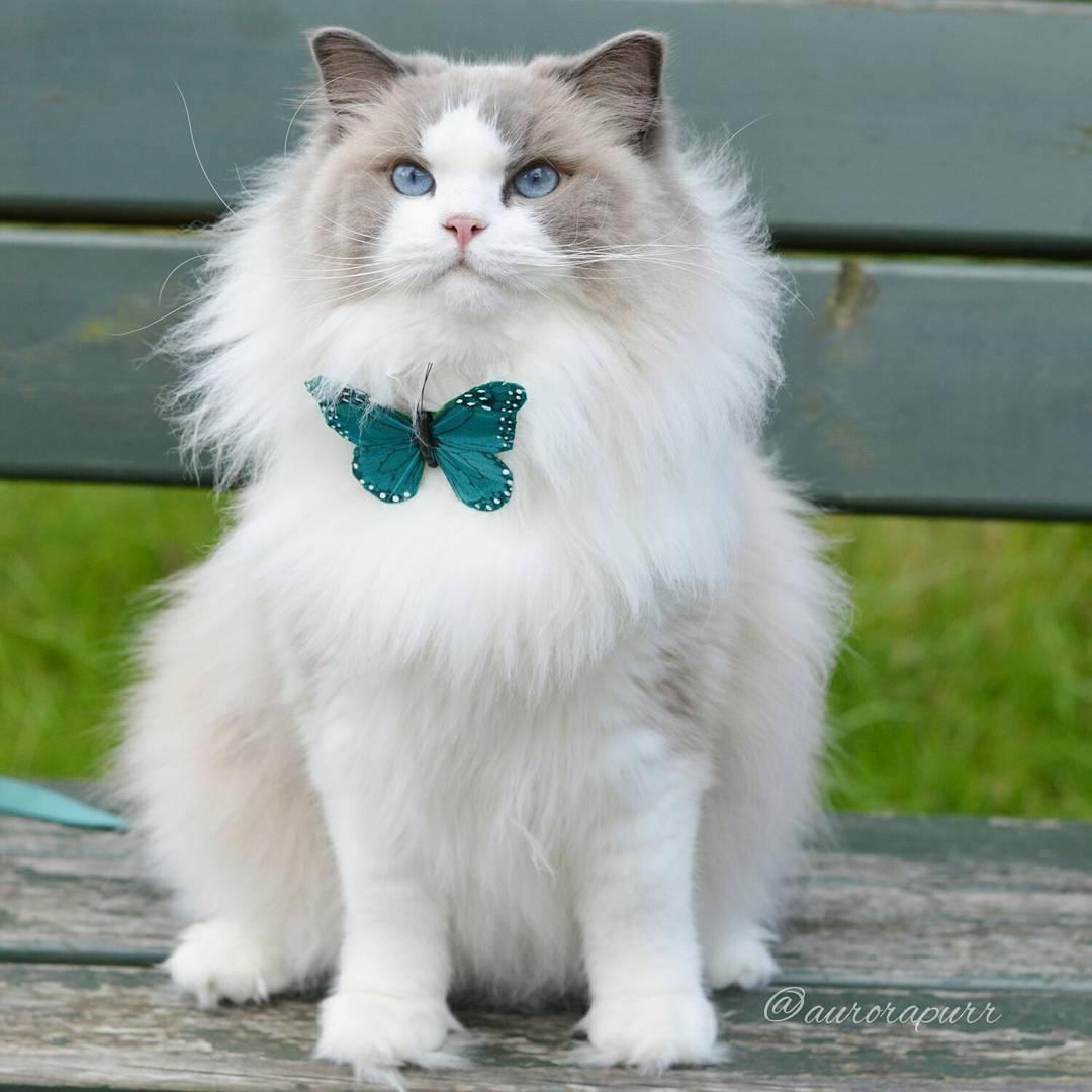 20 chats tellement poilus hiver