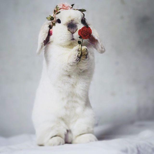 Exempel, l'adorable lapin qui va vous faire fondre