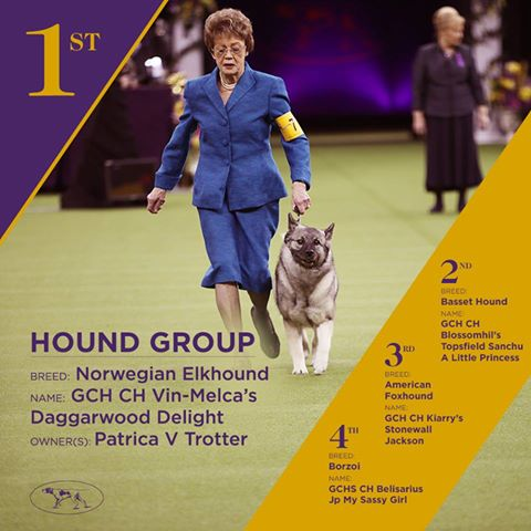 chiens lauréats westminster dog show