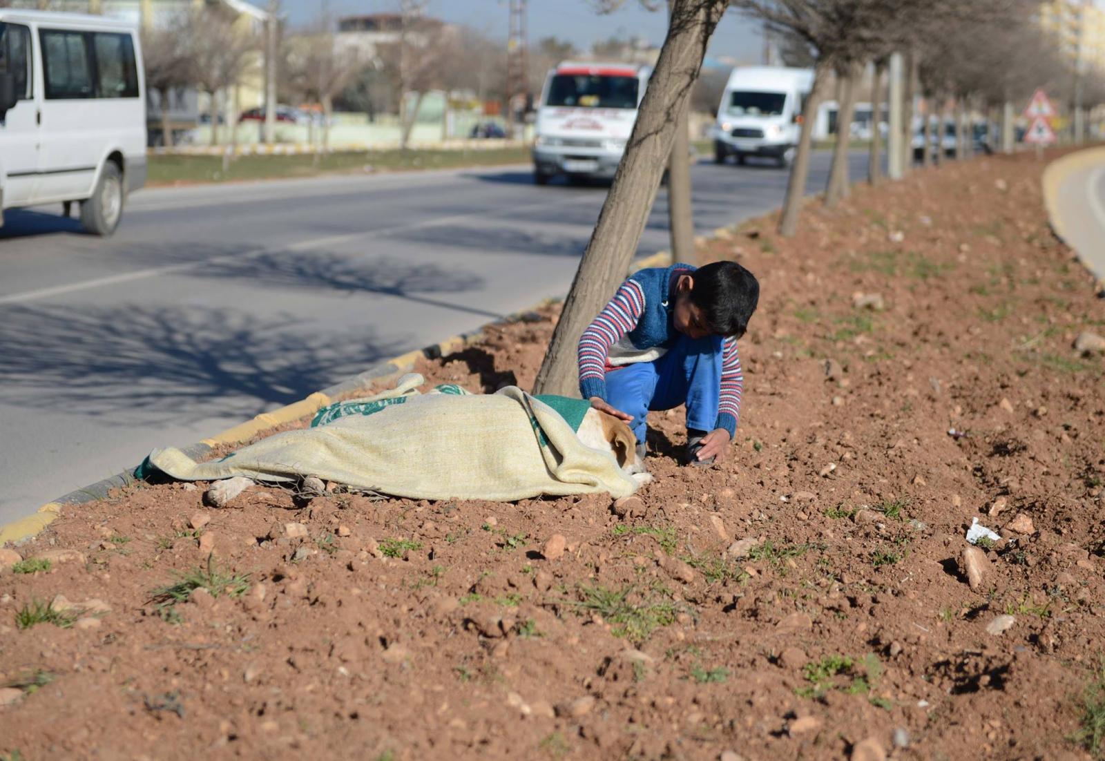 réfugié syrien avec un chien