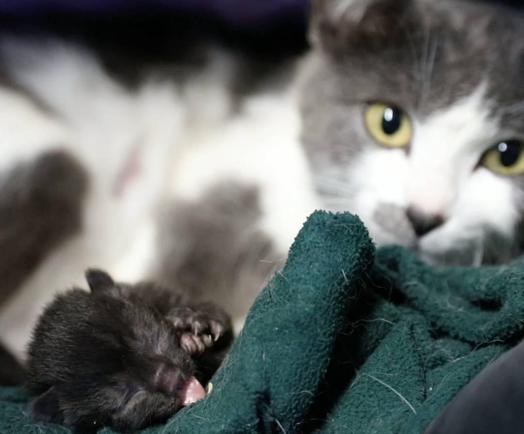 chatte donne la vie dans un garage
