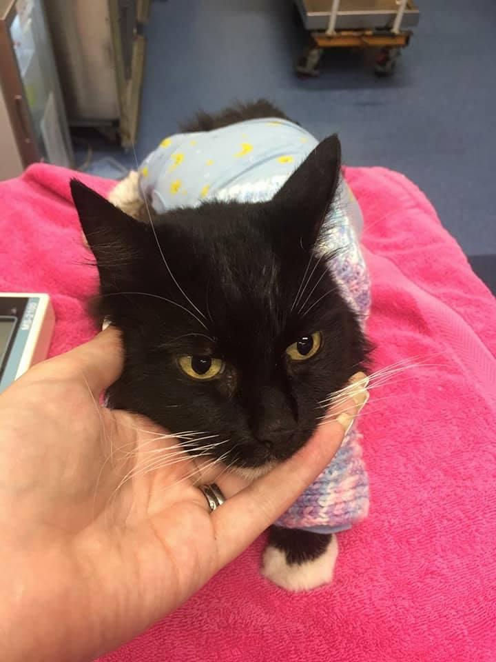 chat sauvé de la noyade