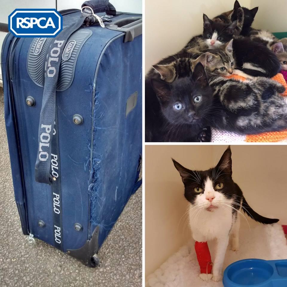 chats abandonnés dans une valise