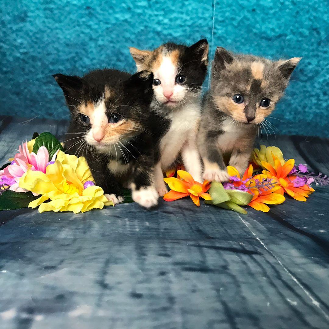 En pleine période d'abandon de chatons, ces sauveurs ont un message (poilu) pour vous !