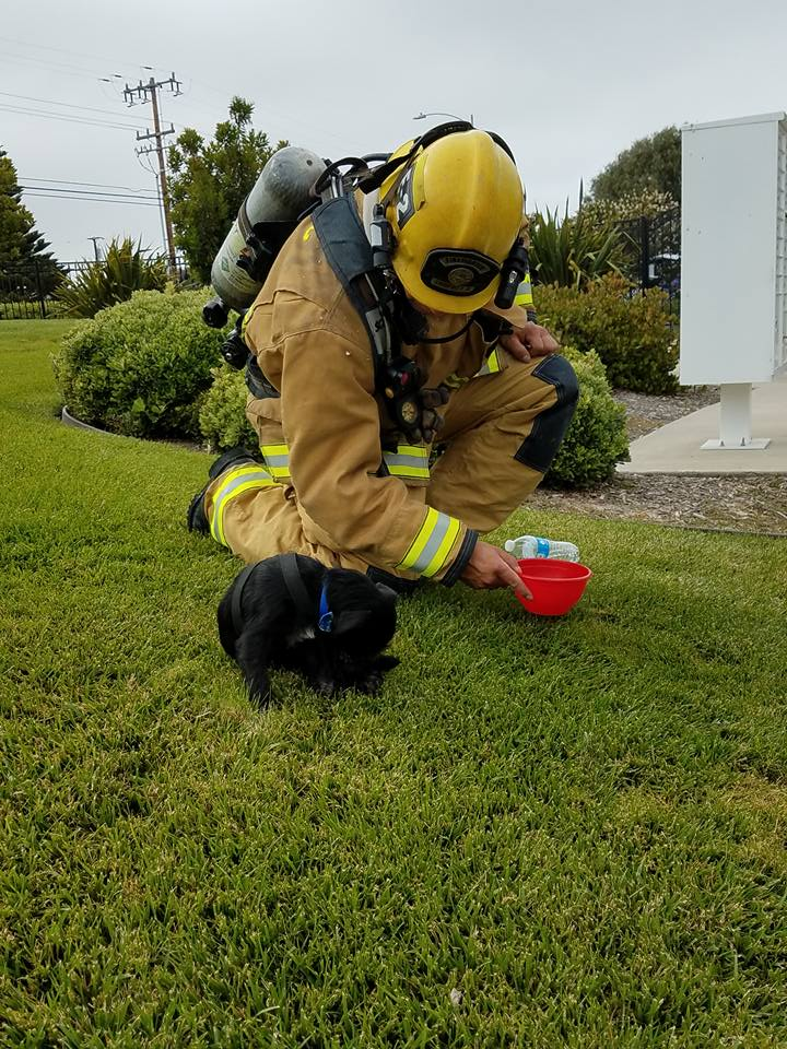 Les pompiers sauvent un chien d'une maison en feu, mais ils ne s'attendaient pas à ça !