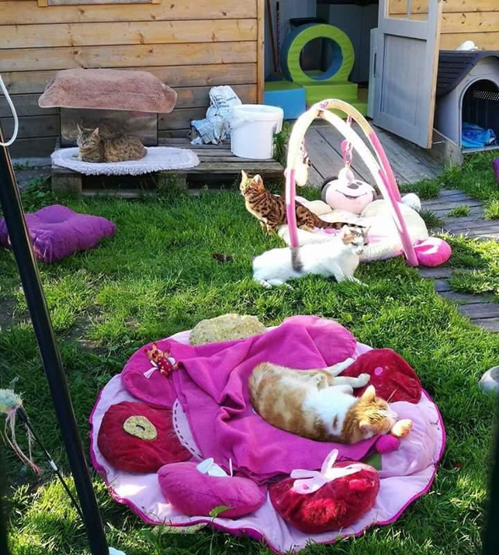 chats jouer dehors