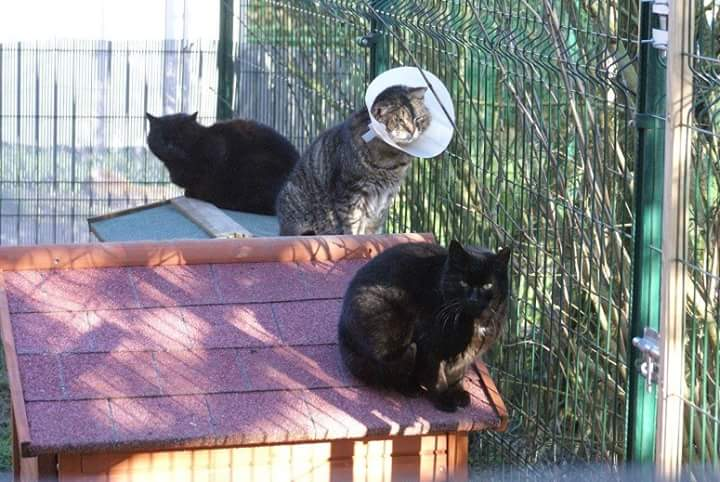 chats dehors
