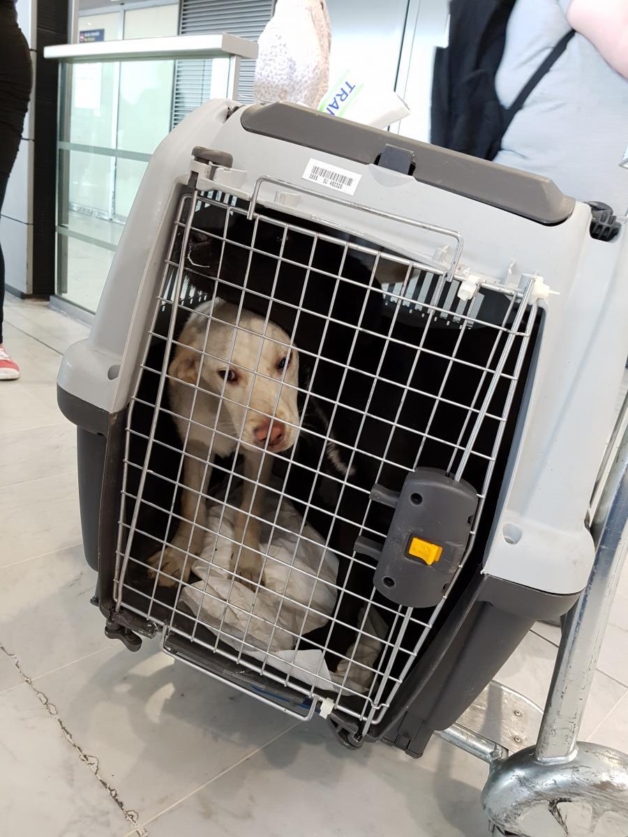 malinka chien famille d'accueil