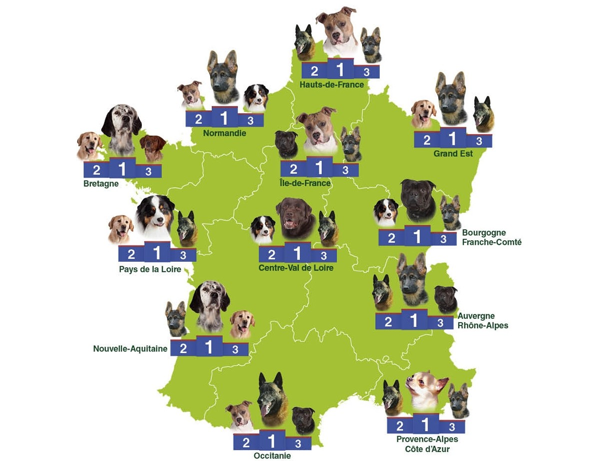 carte france races de chien