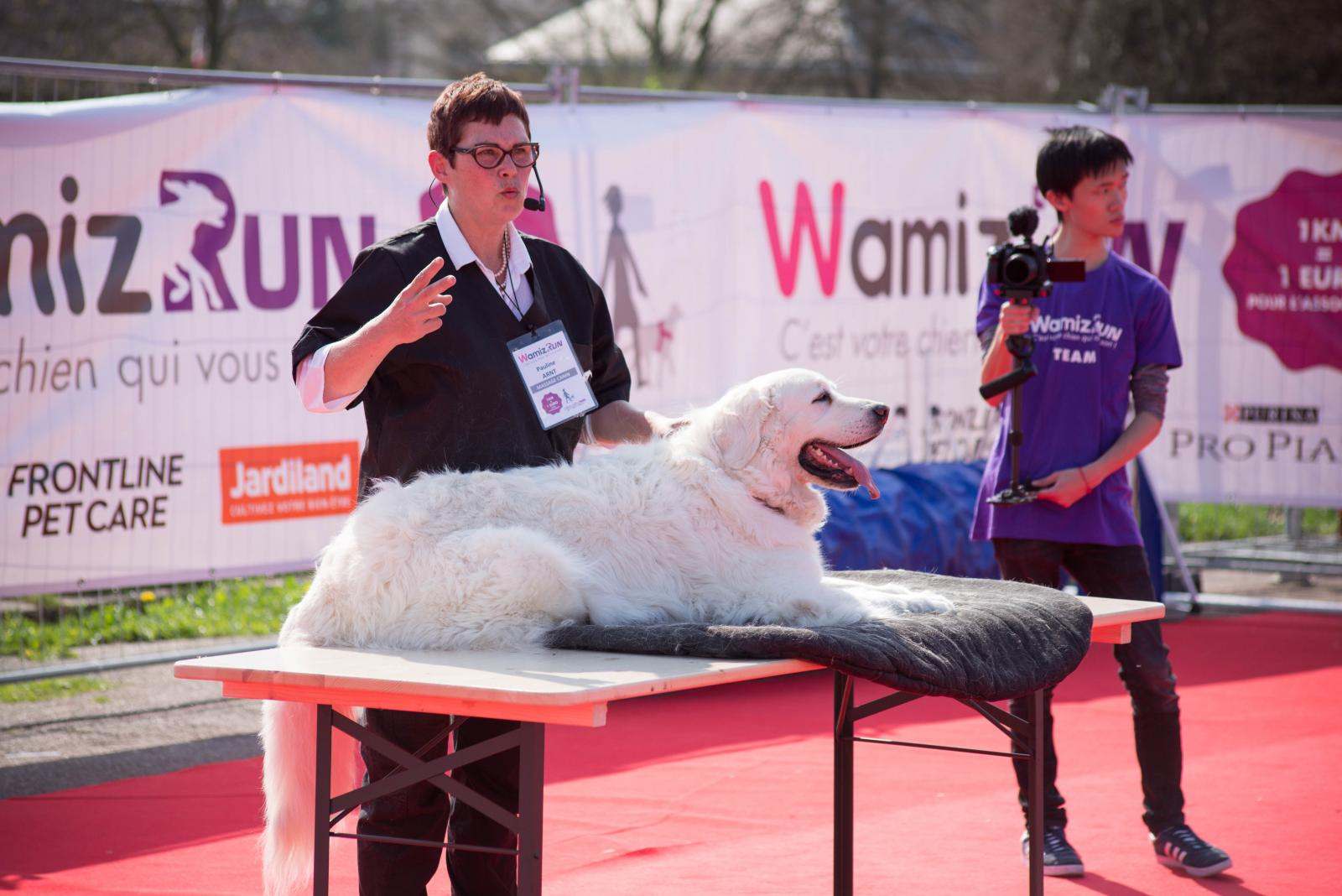 démonstration massages canins wamiz run