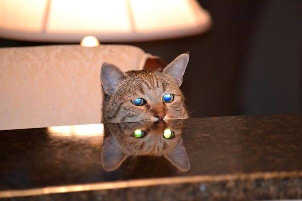 chats démoniaques