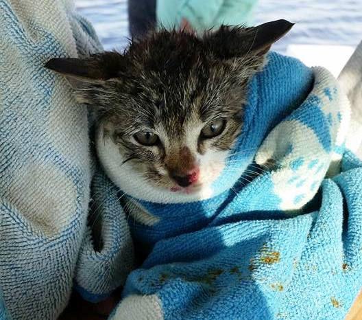 Un agent sauve un chaton jeté du haut d'un pont dans l'eau et décide de l'adopter