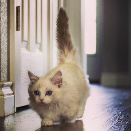 adorable munchkin