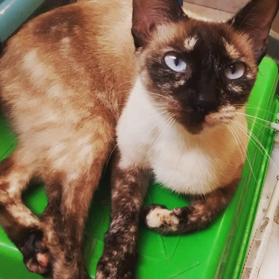 chats et chiens vitiligo