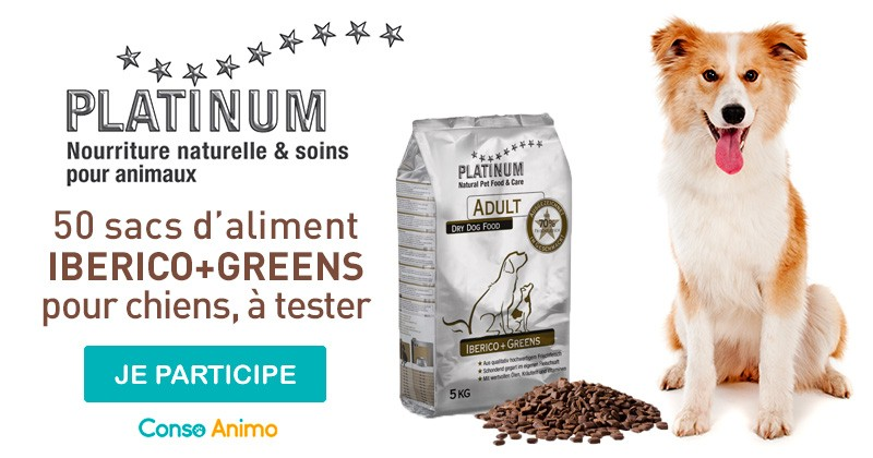 Testez l'aliment pour chien Iberico+Greens de Platinum !