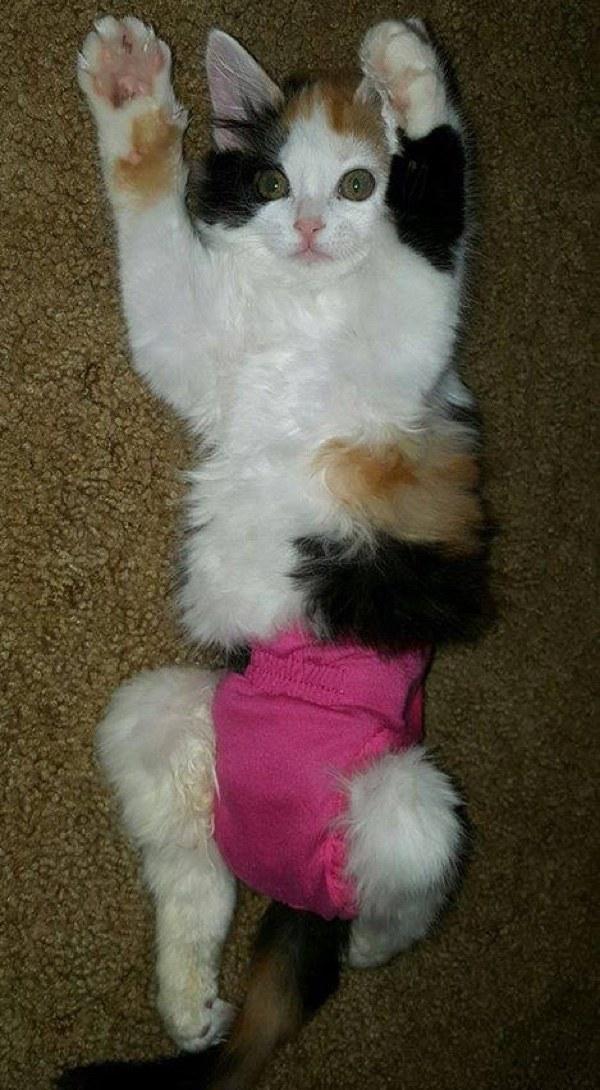 chatte paralysée qui prend soin d'autres chats