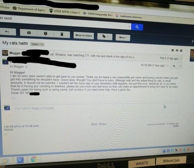 lettre à un vétérinaire pour un chat qui a bu du lait