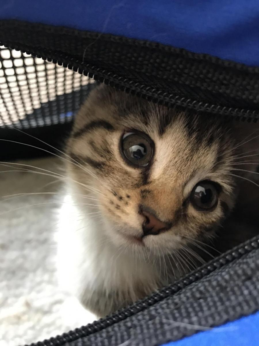 Elle adopte un chaton pour tenir compagnie à son chat de 17 ans, et c'est trop mignon