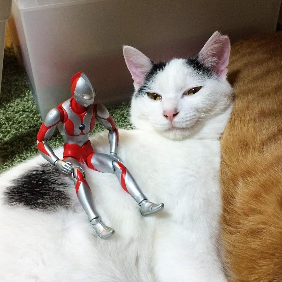 chat blanc jouet robot