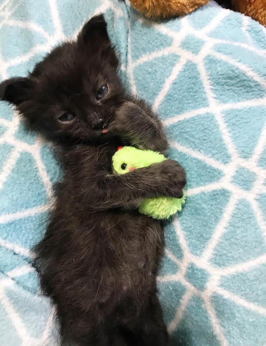 chaton petit noir