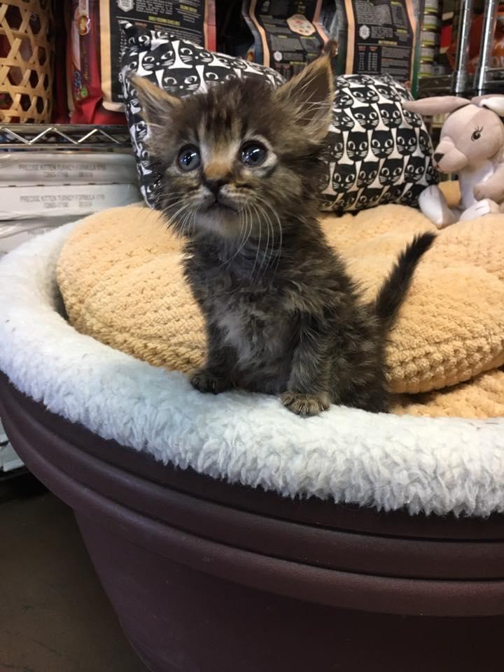 Un chaton qui ne pouvait pas ouvrir les yeux surprend tout le monde avec ses grands yeux adorables