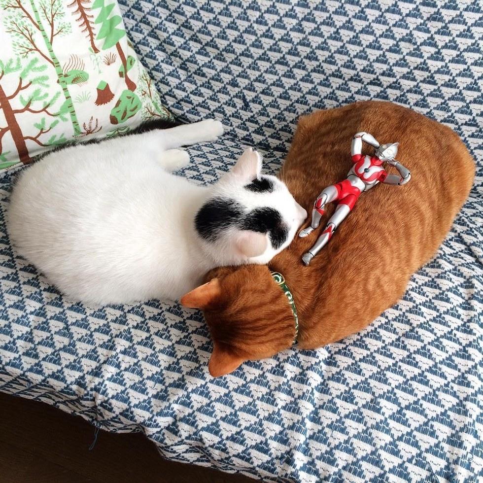 chats amis calins