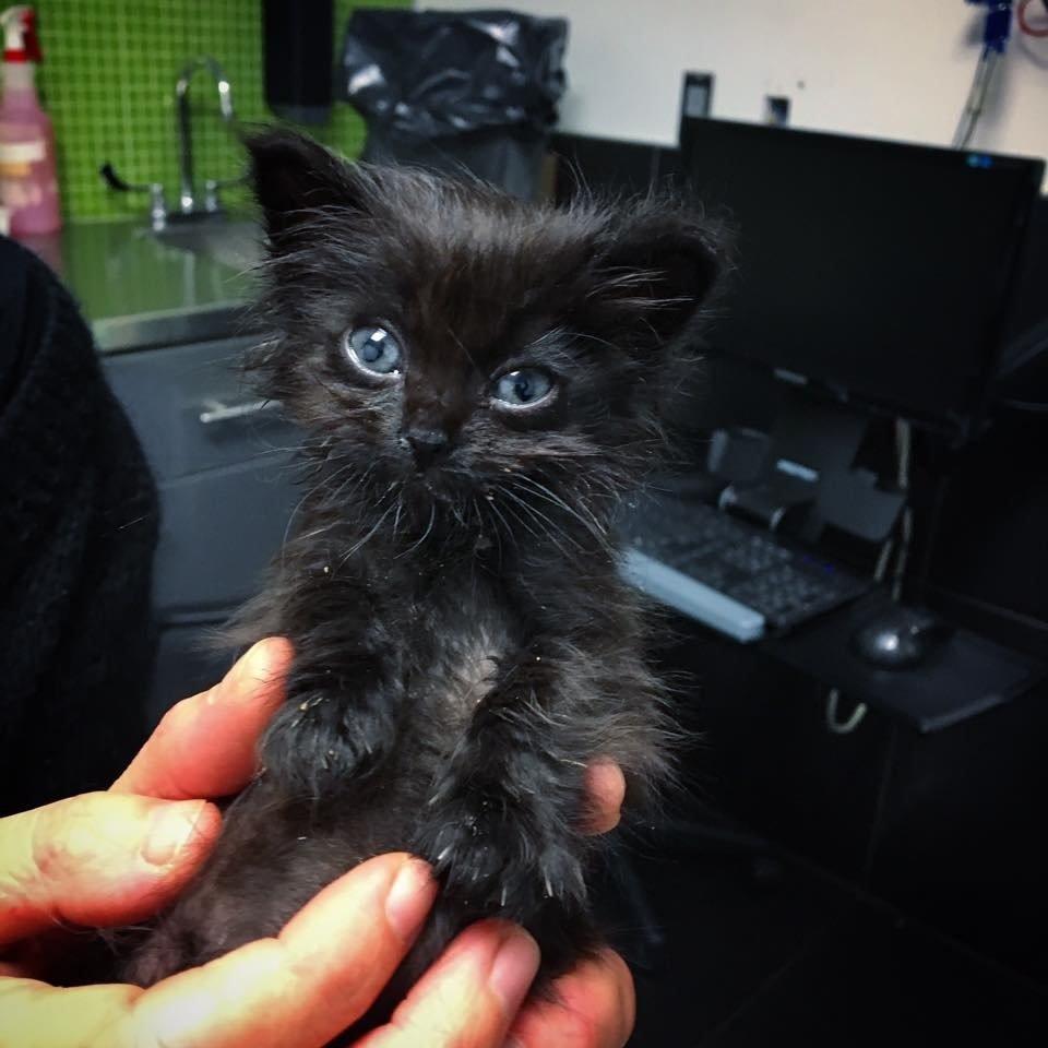 chaton noir tout petit