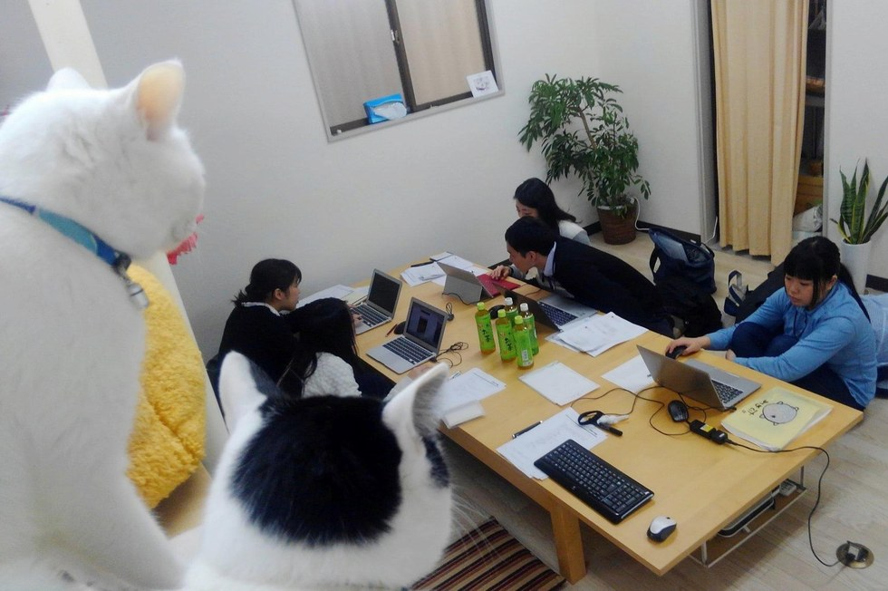 Une entreprise japonaise paye ses employés pour sauver et adopter des chats