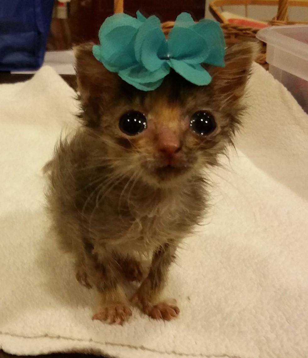 mini chat bijou