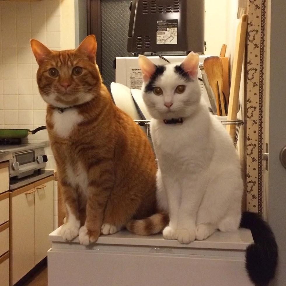 chats amis nourriture