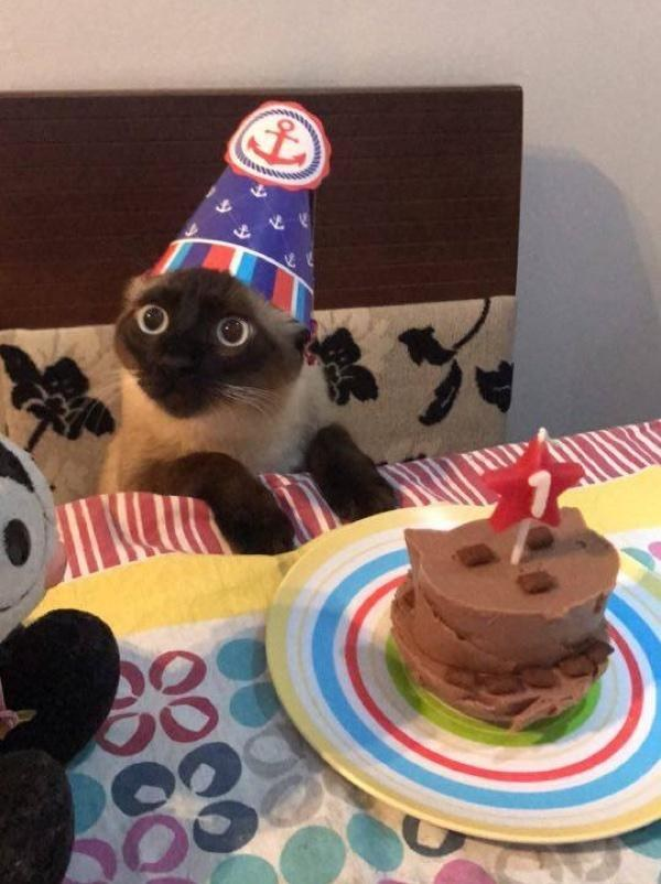 chat anniversaire chapeau