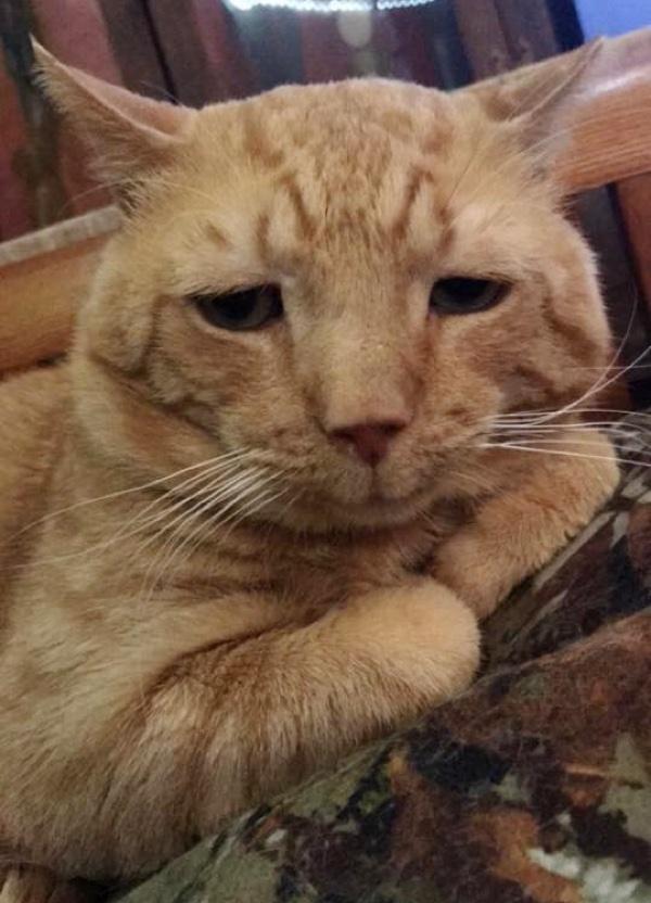 Ce chat était le plus triste du refuge, mais tout va changer !