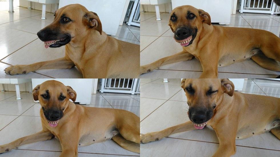 pandora chien dentier