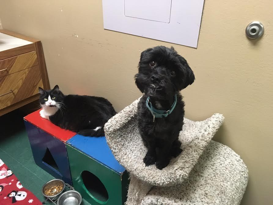 rat, chien et chat amis