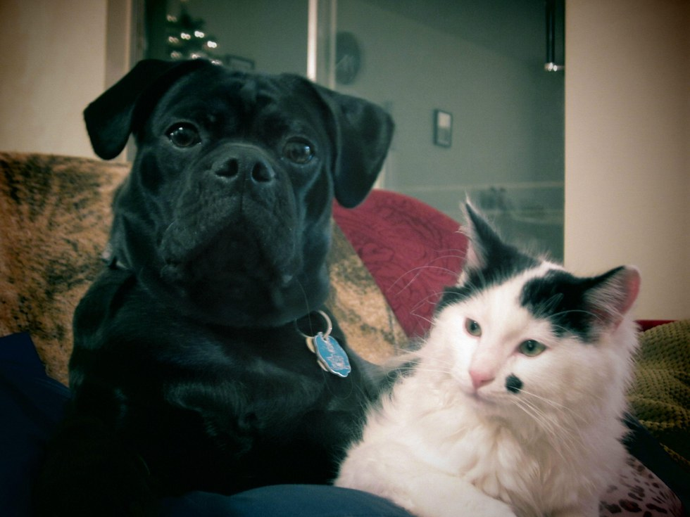 chaton sauvé par un chien