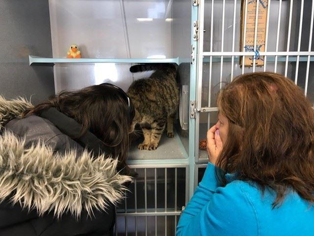 chat qui retrouve sa famille 2 ans après sa disparition