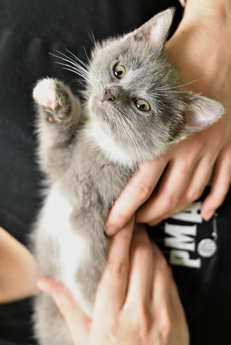 chaton à 3 pattes avec le coeur dehors